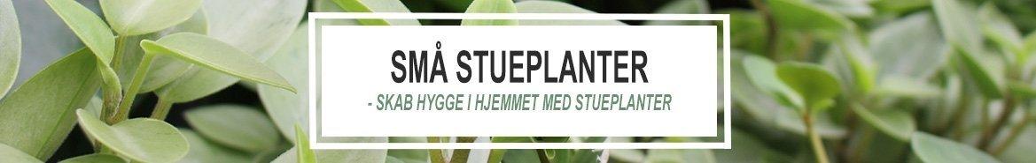 Små Stueplanter