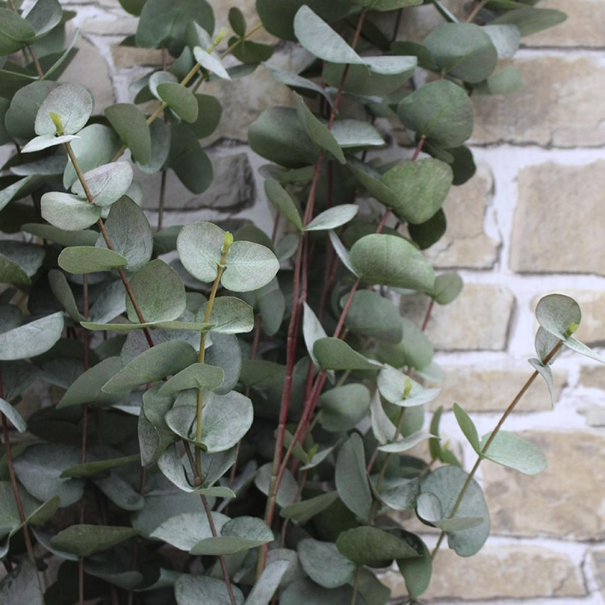 Svært Eucalyptus - Kunstig WR-61