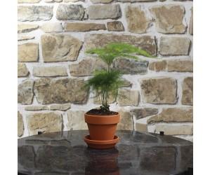 rund mini kaktus