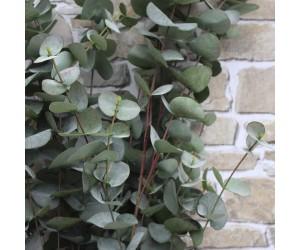 kunstig eucalyptus