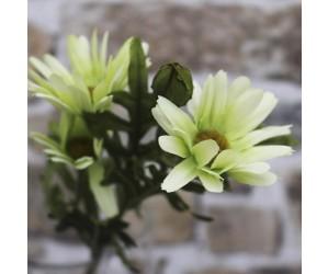 Marguerit blomst