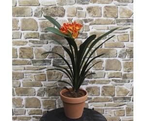 Mønjelilje plante