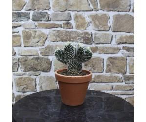 Mickey Mouse Kaktus i skjuler