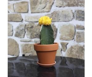 gul kaktus