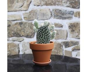 Mickeymouse Kaktus Hvid